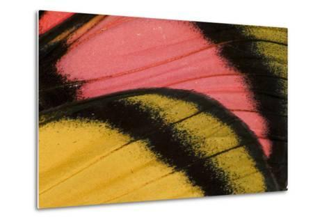 Close-Up Detail Wing Pattern of Tropical Butterfly-Darrell Gulin-Metal Print