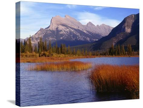 Canada, Alberta, Banff National Park, Marsh Grass in Vermilion Lakes and Mount Rundle-John Barger-Stretched Canvas Print
