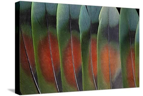 Love Bird Tail Feathers Fanned Out-Darrell Gulin-Stretched Canvas Print
