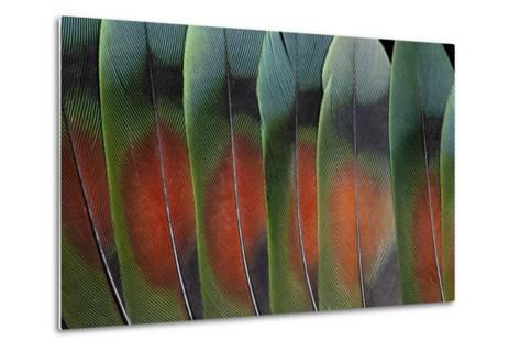Love Bird Tail Feathers Fanned Out-Darrell Gulin-Metal Print