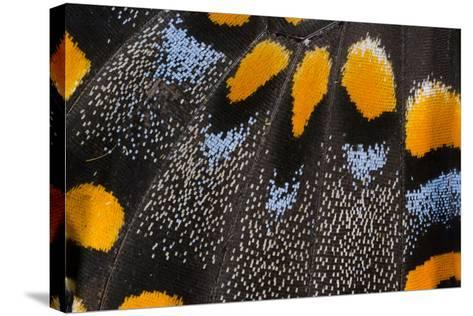Close-Up Detail Wing Pattern of Butterfly-Darrell Gulin-Stretched Canvas Print