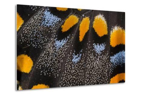 Close-Up Detail Wing Pattern of Butterfly-Darrell Gulin-Metal Print