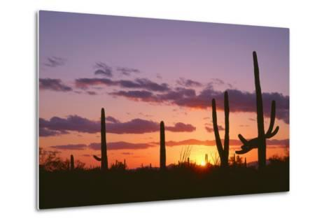 Arizona, Saguaro National Park, Saguaro Cacti are Silhouetted at Sunset in the Tucson Mountains-John Barger-Metal Print