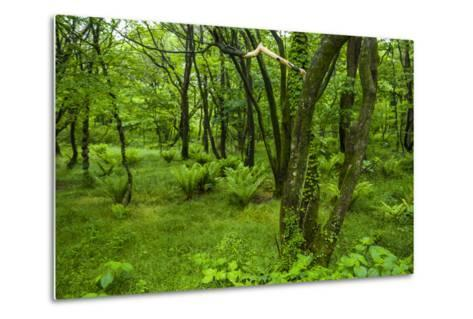 Lush Green Forest in the Hallasan National Forest, Jejudo Island, South Korea-Michael Runkel-Metal Print