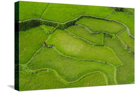 Hapao Rice Terraces, World Heritage Site, Banaue, Luzon, Philippines-Michael Runkel-Stretched Canvas Print