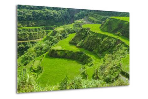 Hapao Rice Terraces, Part of the World Heritage Site Banaue, Luzon, Philippines-Michael Runkel-Metal Print