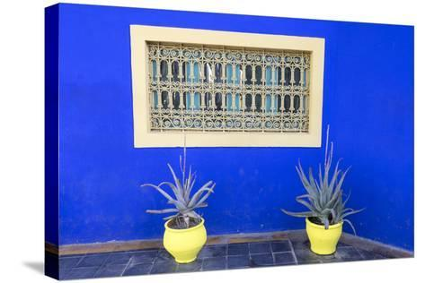 Morocco, Marrakech, Potted Succulent Plants Outside a Blue Building-Emily Wilson-Stretched Canvas Print