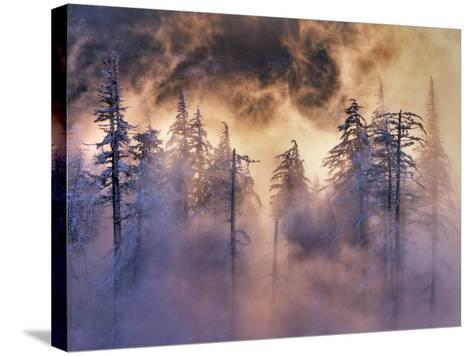 USA, Oregon, Mt Hood National Forest. Evergreens in Fog-Jaynes Gallery-Stretched Canvas Print