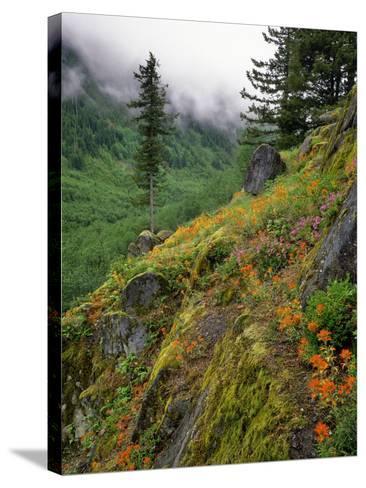 USA, Oregon, Mt Hood National Forest. Hillside Landscape in Fog-Jaynes Gallery-Stretched Canvas Print