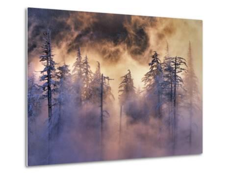 USA, Oregon, Mt Hood National Forest. Evergreens in Fog-Jaynes Gallery-Metal Print