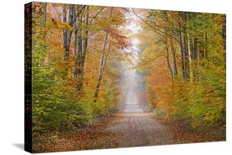Road in Fall Color Schoolcraft County, Upper Peninsula, Michigan-Richard and Susan Day-Stretched Canvas Print