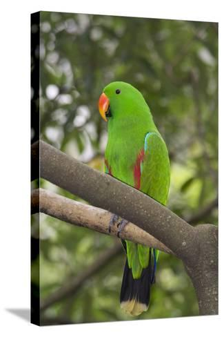 Singapore. Colorful Green Parrot-Cindy Miller Hopkins-Stretched Canvas Print
