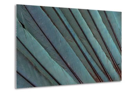 Kingfisher Wing Feathers-Darrell Gulin-Metal Print
