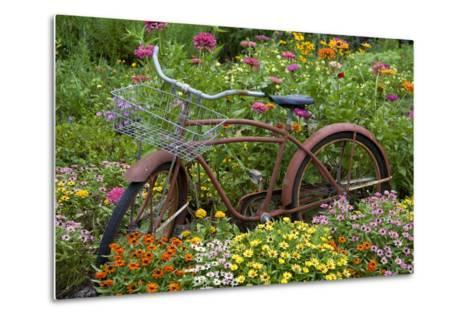 Old Bicycle with Flower Basket in Garden with Zinnias, Marion County, Illinois-Richard and Susan Day-Metal Print