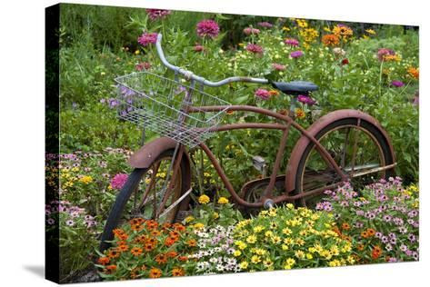 Old Bicycle with Flower Basket in Garden with Zinnias, Marion County, Illinois-Richard and Susan Day-Stretched Canvas Print