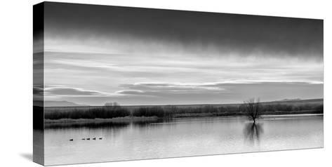 New Mexico, Bosque Del Apache National Wildlife Refuge-Ann Collins-Stretched Canvas Print