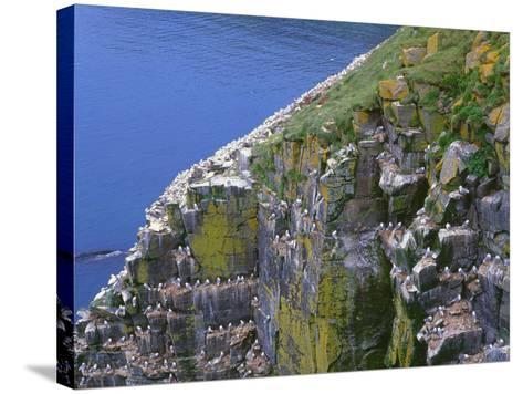 Newfoundland, Cape Saint Mary's Ecological Reserve-John Barger-Stretched Canvas Print