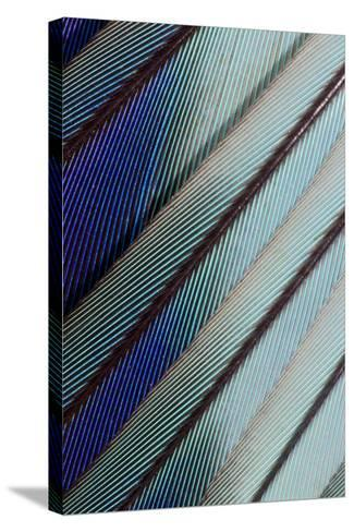 Lilac Breasted Roller Feathers Pattern-Darrell Gulin-Stretched Canvas Print