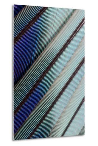 Lilac Breasted Roller Feathers Pattern-Darrell Gulin-Metal Print