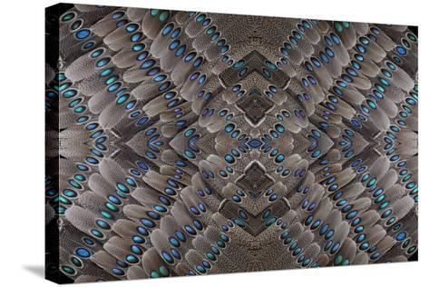 Grey Peacock Tail Feathers Design-Darrell Gulin-Stretched Canvas Print