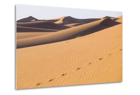 Morocco, Erg Chegaga Is a Saharan Sand Dune-Emily Wilson-Metal Print