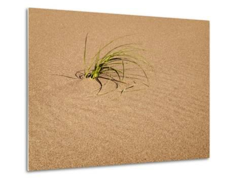 USA, Colorado, Great Sand Dunes National Park and Preserve. Blowout Grass Grows on a Dune-Ann Collins-Metal Print