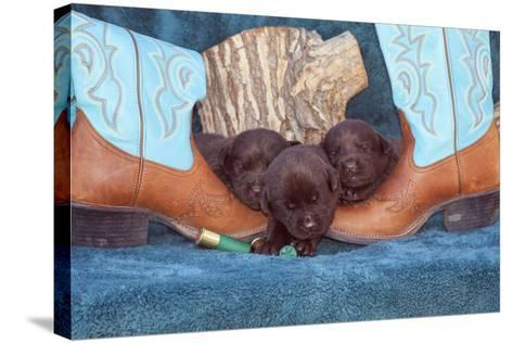 Pile of Sleeping Labrador Retriever Puppies-Zandria Muench Beraldo-Stretched Canvas Print