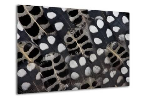 Spots of White on Mearns Quails Feather Design-Darrell Gulin-Metal Print
