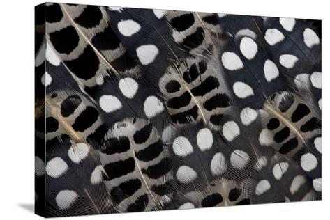 Spots of White on Mearns Quails Feather Design-Darrell Gulin-Stretched Canvas Print