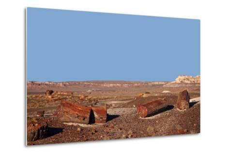 USA, Arizona, Petrified Forest National Park. Crystal Forest-Kymri Wilt-Metal Print