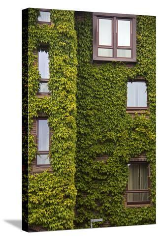 Norway, Bergen. Bryggen Building with Ivy-Kymri Wilt-Stretched Canvas Print