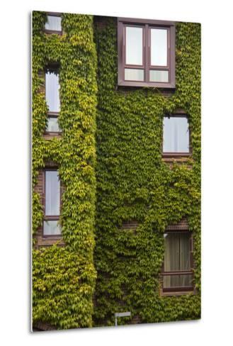Norway, Bergen. Bryggen Building with Ivy-Kymri Wilt-Metal Print