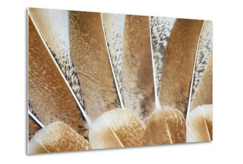 Turkey Wing Feathers Fanned Out-Darrell Gulin-Metal Print