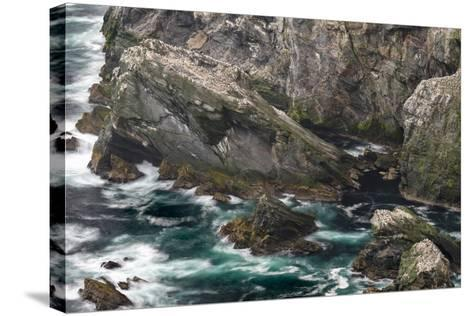 Hermaness National Nature Reserve on the Island Unst. Colony of Northern Gannet-Martin Zwick-Stretched Canvas Print