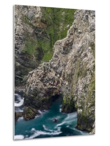 Hermaness National Nature Reserve on the Island Unst. Colony of Northern Gannet-Martin Zwick-Metal Print