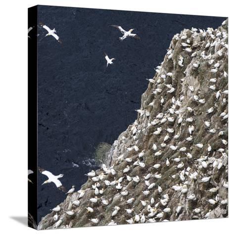 Scotland, Shetland Island-Martin Zwick-Stretched Canvas Print
