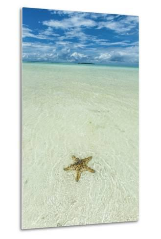 Sea Star in the Sand on the Rock Islands, Palau, Central Pacific-Michael Runkel-Metal Print