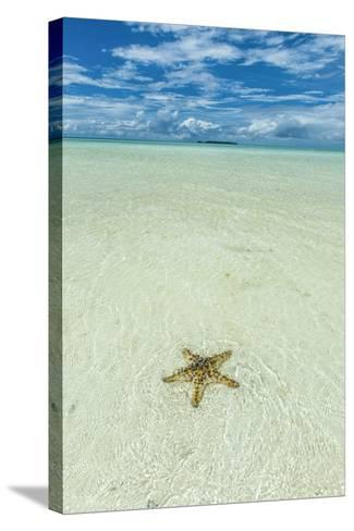 Sea Star in the Sand on the Rock Islands, Palau, Central Pacific-Michael Runkel-Stretched Canvas Print