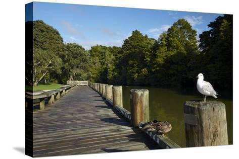 Seagull on Boardwalk by Mahurangi River, Warkworth, Auckland Region, North Island, New Zealand-David Wall-Stretched Canvas Print