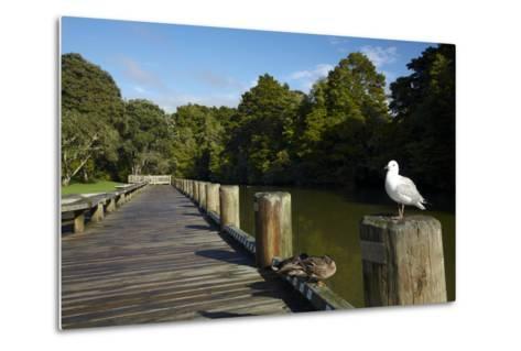 Seagull on Boardwalk by Mahurangi River, Warkworth, Auckland Region, North Island, New Zealand-David Wall-Metal Print