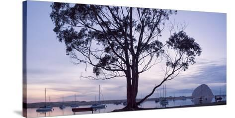 USA, California, Panoramic View of Eucalyptus Tree and Morro Rock at Sunset-Ann Collins-Stretched Canvas Print