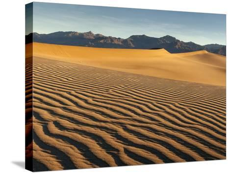 USA, California, Death Valley National Park. Early Morning Sun Hits Mesquite Flat Dunes-Ann Collins-Stretched Canvas Print