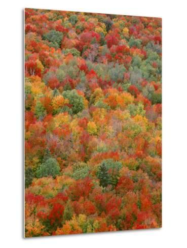 USA, Minnesota, Superior National Forest, Autumn Adds Color to Northern Hardwood Forests-John Barger-Metal Print