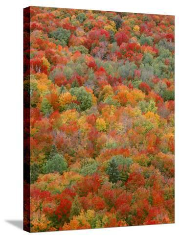 USA, Minnesota, Superior National Forest, Autumn Adds Color to Northern Hardwood Forests-John Barger-Stretched Canvas Print