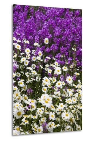 Washington, Palouse, Wildflowers Along the Country Backroad-Terry Eggers-Metal Print