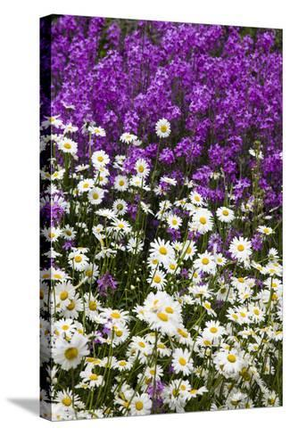 Washington, Palouse, Wildflowers Along the Country Backroad-Terry Eggers-Stretched Canvas Print