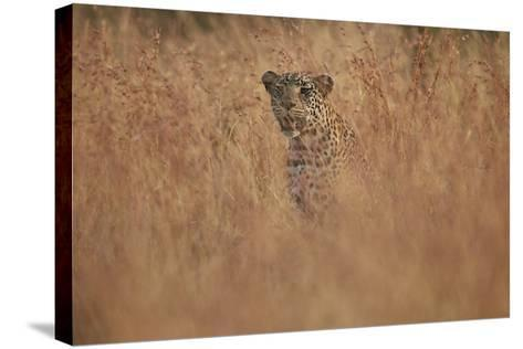 Leopard (Panthera Pardus) in Tall Grass, Kruger National Park, South Africa, Africa-James Hager-Stretched Canvas Print