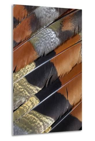 Wing Detail of Feathers Sun Bittern-Darrell Gulin-Metal Print