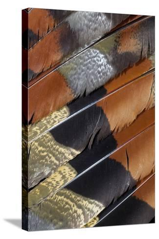 Wing Detail of Feathers Sun Bittern-Darrell Gulin-Stretched Canvas Print