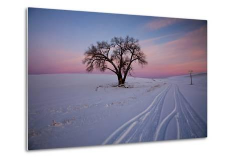 Washington, Sunset Bathed Lone Tree in Snow Covered Winter Field-Terry Eggers-Metal Print
